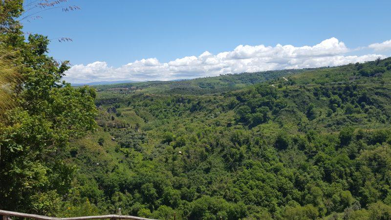 kalabrien, landschaft, olivenbaum, zungri,